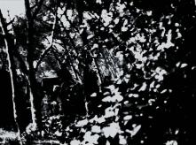 vlcsnap-2020-03-31-10h58m08s117