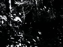 vlcsnap-2020-03-31-11h01m22s845