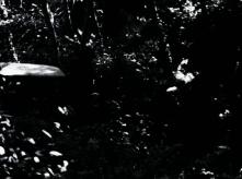 vlcsnap-2020-03-31-11h01m25s718