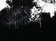 vlcsnap-2020-03-31-11h01m46s349