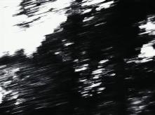 vlcsnap-2020-03-31-11h04m29s699